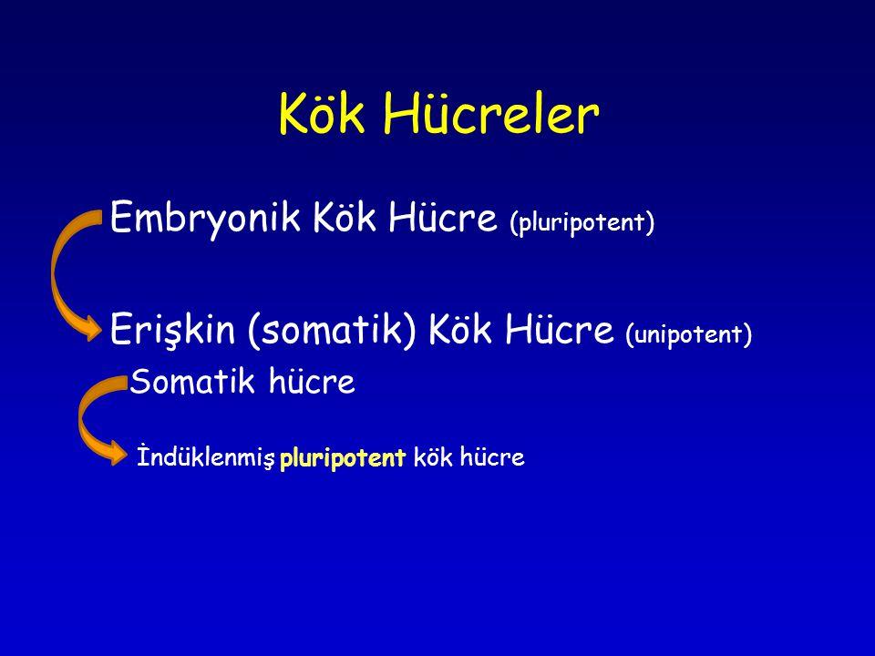 Kök Hücreler Embryonik Kök Hücre (pluripotent) Erişkin (somatik) Kök Hücre (unipotent) Somatik hücre İndüklenmiş pluripotent kök hücre