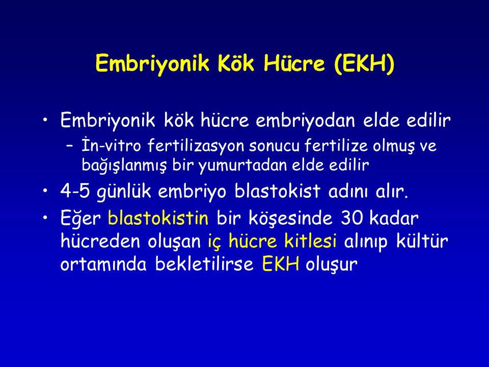Embriyonik Kök Hücre (EKH) •Embriyonik kök hücre embriyodan elde edilir –İn-vitro fertilizasyon sonucu fertilize olmuş ve bağışlanmış bir yumurtadan elde edilir •4-5 günlük embriyo blastokist adını alır.