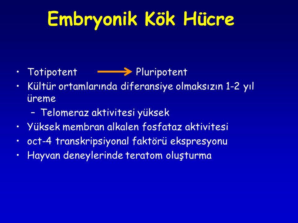 Embryonik Kök Hücre •Totipotent Pluripotent •Kültür ortamlarında diferansiye olmaksızın 1-2 yıl üreme –Telomeraz aktivitesi yüksek •Yüksek membran alk