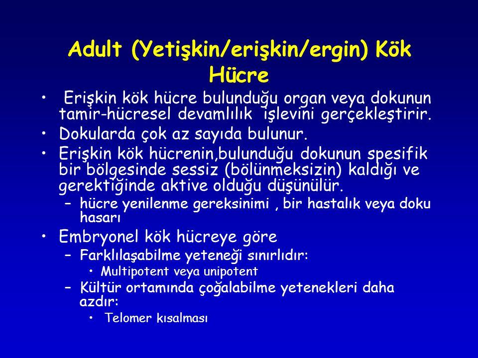Adult (Yetişkin/erişkin/ergin) Kök Hücre • Erişkin kök hücre bulunduğu organ veya dokunun tamir-hücresel devamlılık işlevini gerçekleştirir.