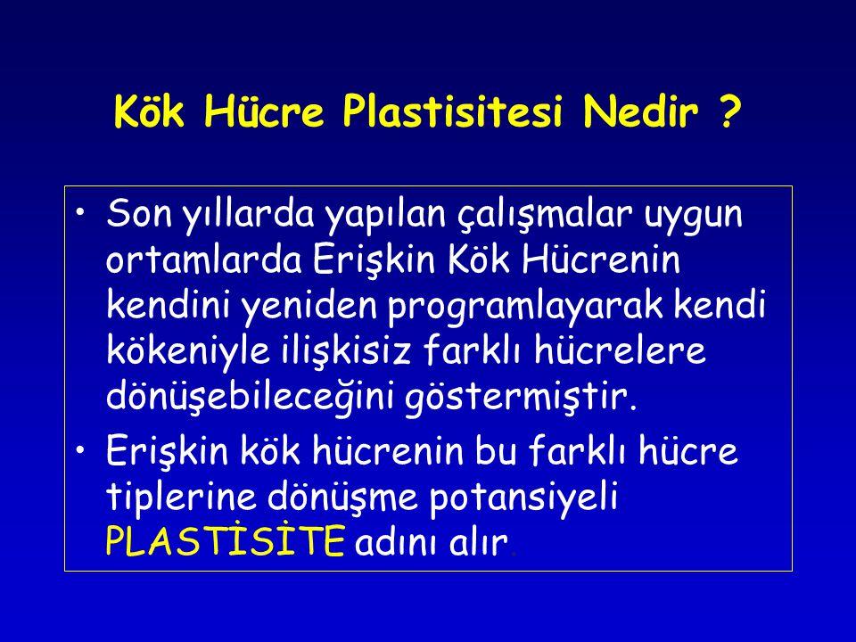 Kök Hücre Plastisitesi Nedir .