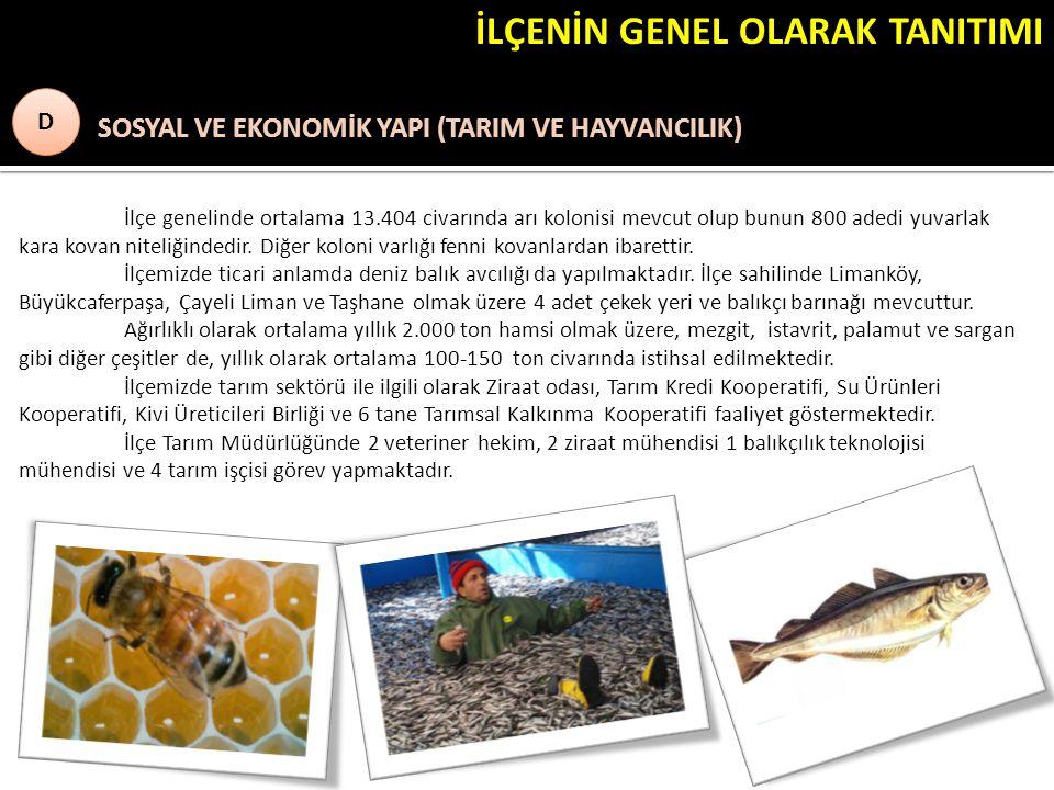 İLÇENİN GENEL OLARAK TANITIMI ) SOSYAL VE EKONOMİK YAPI (TARIM VE HAYVANCILIK) D D İlçe genelinde ortalama 13.404 civarında arı kolonisi mevcut olup b