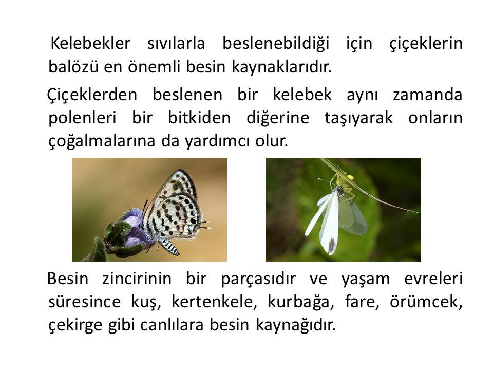 Kelebekler sıvılarla beslenebildiği için çiçeklerin balözü en önemli besin kaynaklarıdır. Çiçeklerden beslenen bir kelebek aynı zamanda polenleri bir