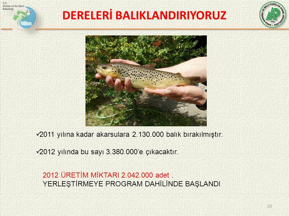 DERELERİ BALIKLANDIRIYORUZ 10  2011 yılına kadar akarsulara 2.130.000 balık bırakılmıştır.  2012 yılında bu sayı 3.380.000'e çıkacaktır. 2012 ÜRETİM