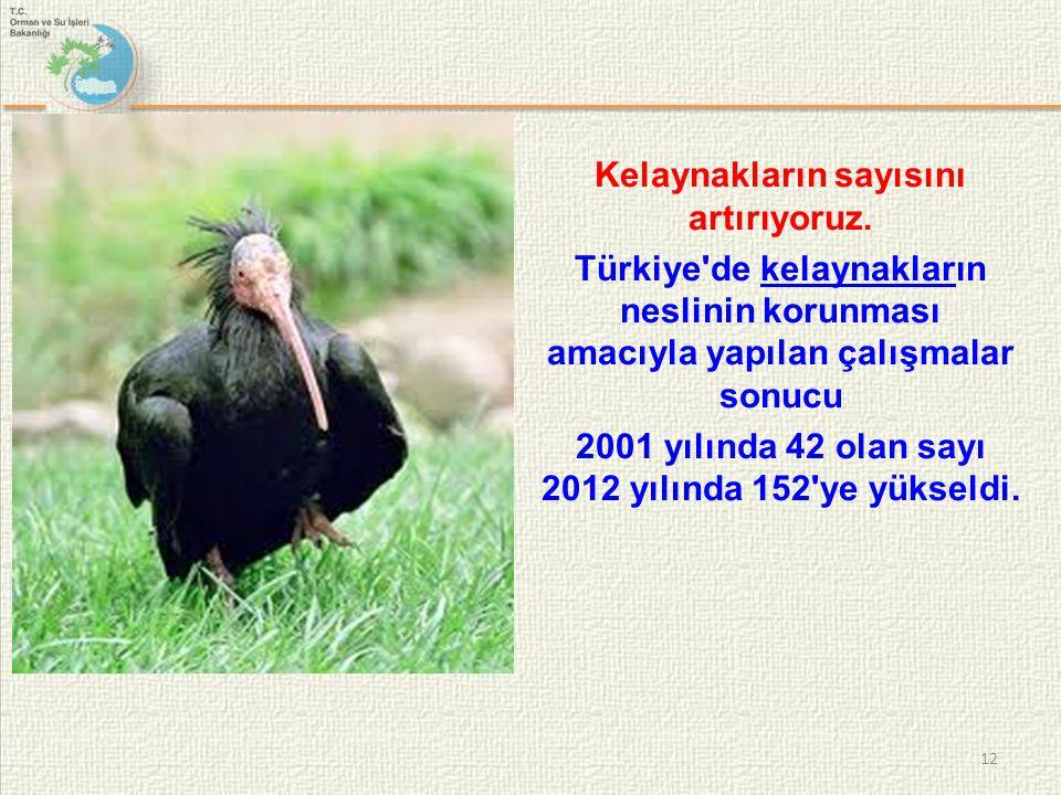 Kelaynakların sayısını artırıyoruz. Türkiye'de kelaynakların neslinin korunması amacıyla yapılan çalışmalar sonucukelaynaklar 2001 yılında 42 olan say