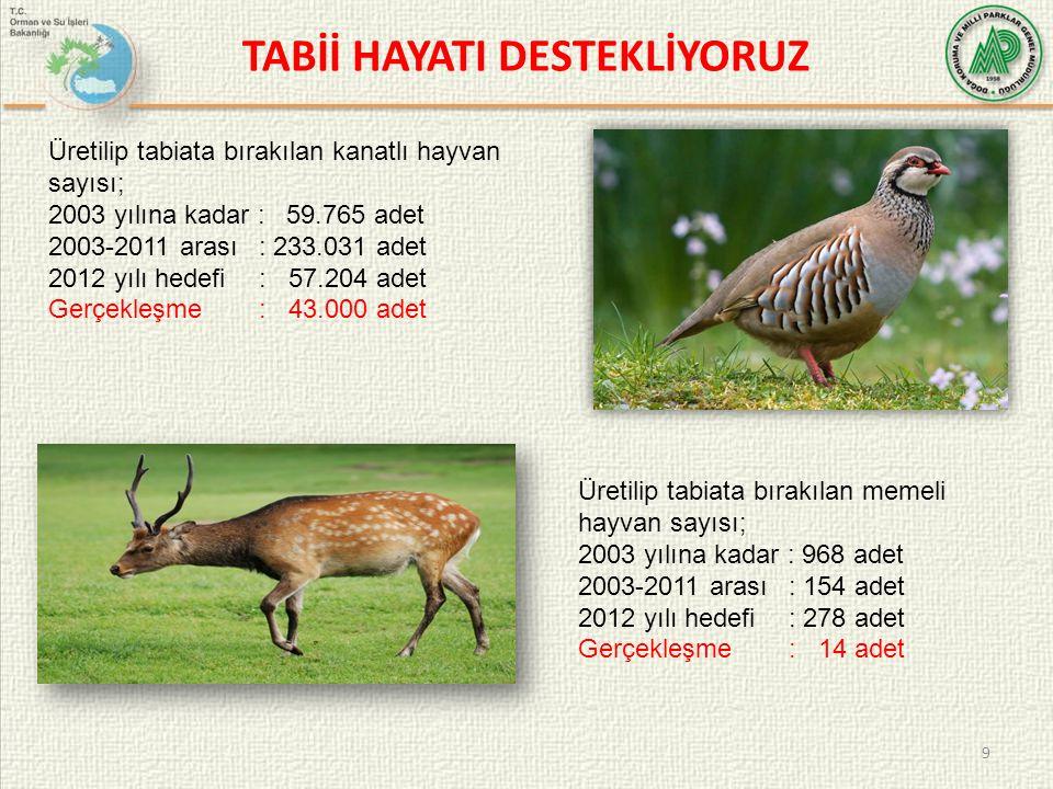 TABİİ HAYATI DESTEKLİYORUZ 9 Üretilip tabiata bırakılan kanatlı hayvan sayısı; 2003 yılına kadar : 59.765 adet 2003-2011 arası: 233.031 adet 2012 yılı