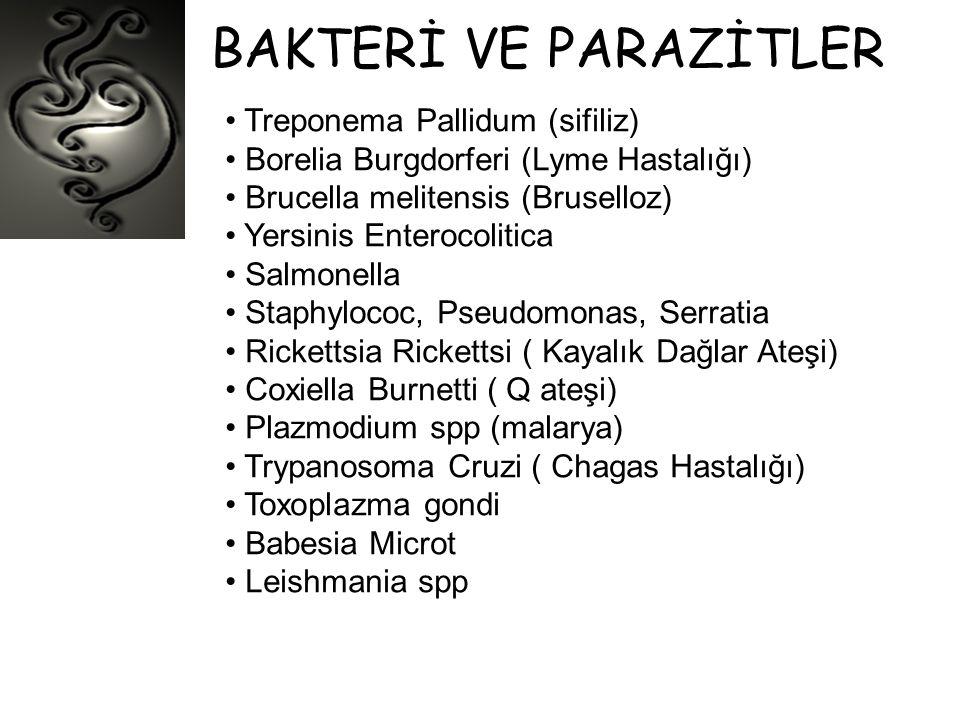 BAKTERİ VE PARAZİTLER • Treponema Pallidum (sifiliz) • Borelia Burgdorferi (Lyme Hastalığı) • Brucella melitensis (Bruselloz) • Yersinis Enterocolitic