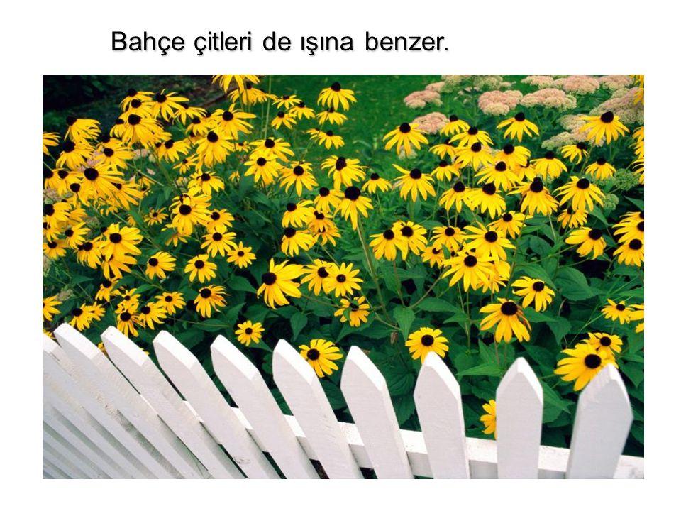 Bahçe çitleri de ışına benzer. Bahçe çitleri de ışına benzer.