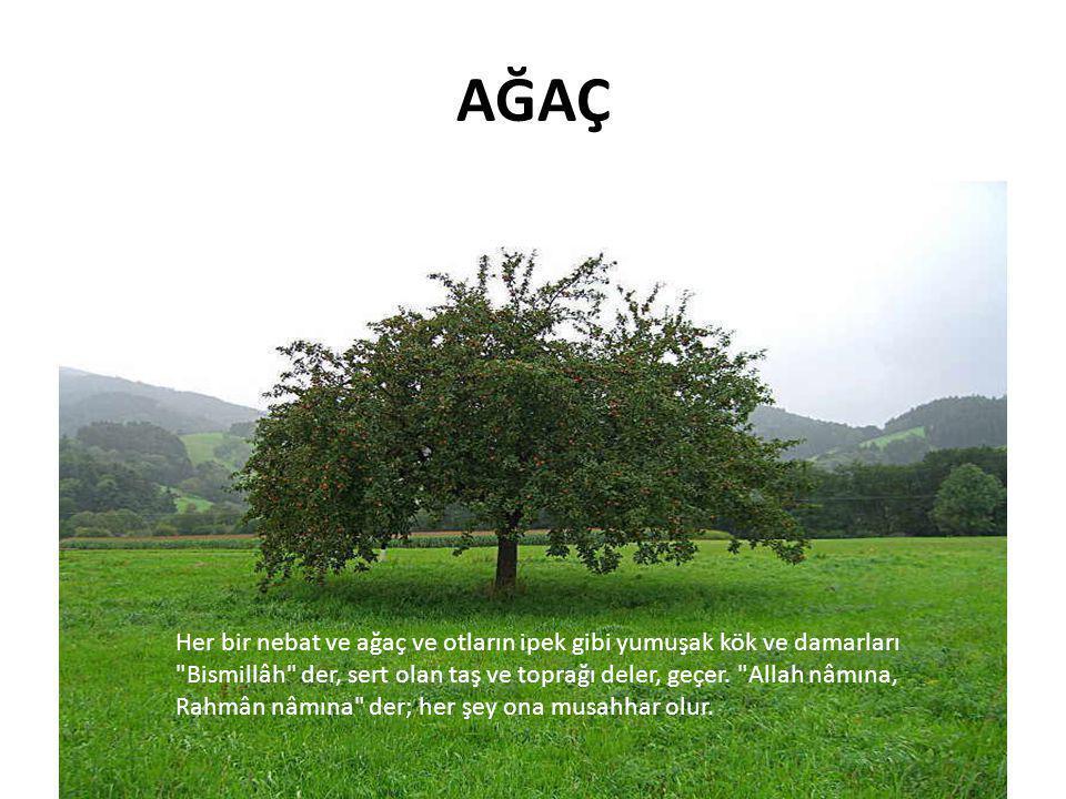 Elmanın Hikâyesi • Bir küçük cansız çekirdekle başladı elmanın hikâyesi • Kaç milyon yıl önce, bilen yok Dünyaya nasıl indiğini, yahut yerden ilk olarak nasıl fışkırdığını gören de yok, işiten de • Milyonlarca kez ağaç oldu, milyonlarca kez çekirdek • Bir o kadar da meyve, yaprak ve çiçek oldu bu küçücük cansız şey • Ne tükendi, ne eskidi, ne de tadından ve kokusundan birşey kaybetti • Öldü ve dirildi nesiller boyu Toprağa ölü girdi, onda hayat buldu