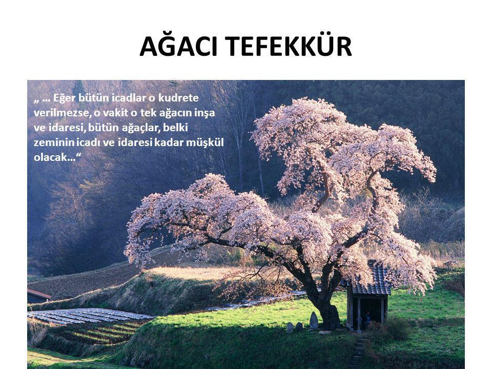 AĞACI TEFEKKÜR Yüzyıllardır varlıklarını sürdüren çam ağaçlarının dünyada halen 690 nev i mevcuttur Yaprak döken ağaçların ise 10.000 türü mevcuttur.