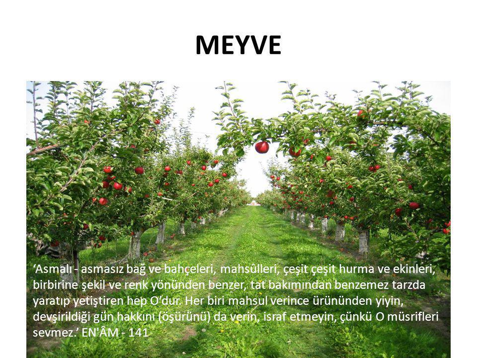 Mucizevî Bir İçecek: Elma Sirkesi Sık sık üşütür müsünüz.
