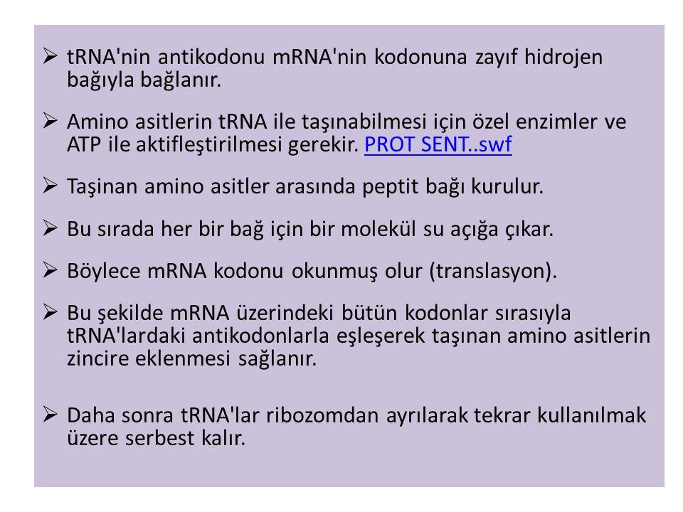  tRNA'nin antikodonu mRNA'nin kodonuna zayıf hidrojen bağıyla bağlanır.  Amino asitlerin tRNA ile taşınabilmesi için özel enzimler ve ATP ile aktifl