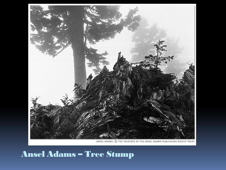 Ansel Adams – Tree Stump