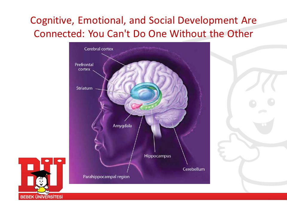 Cognitive, Emotional, and Social Development Are Connected: You Can't Do One Without the Other