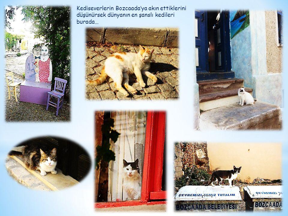 Kediseverlerin Bozcaada'ya akın ettiklerini düşünürsek dünyanın en şanslı kedileri burada…