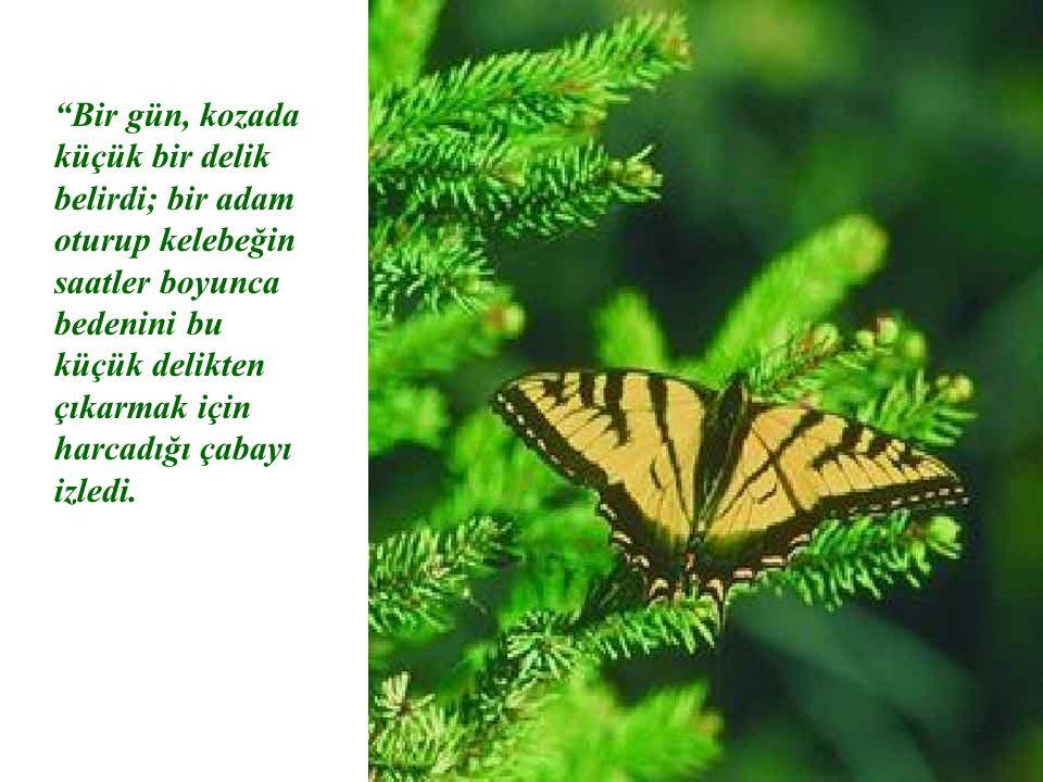 """""""Bir gün, kozada küçük bir delik belirdi; bir adam oturup kelebeğin saatler boyunca bedenini bu küçük delikten çıkarmak için harcadığı çabayı izledi."""