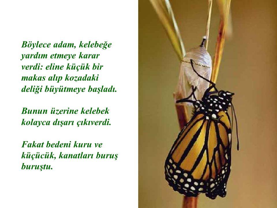 Adam izlemeye devam etti; çünkü her an kelebeğin kanatlarının açılıp genişleyeceğini ve bedenini taşıyacak kadar güçleneceğini umuyordu.