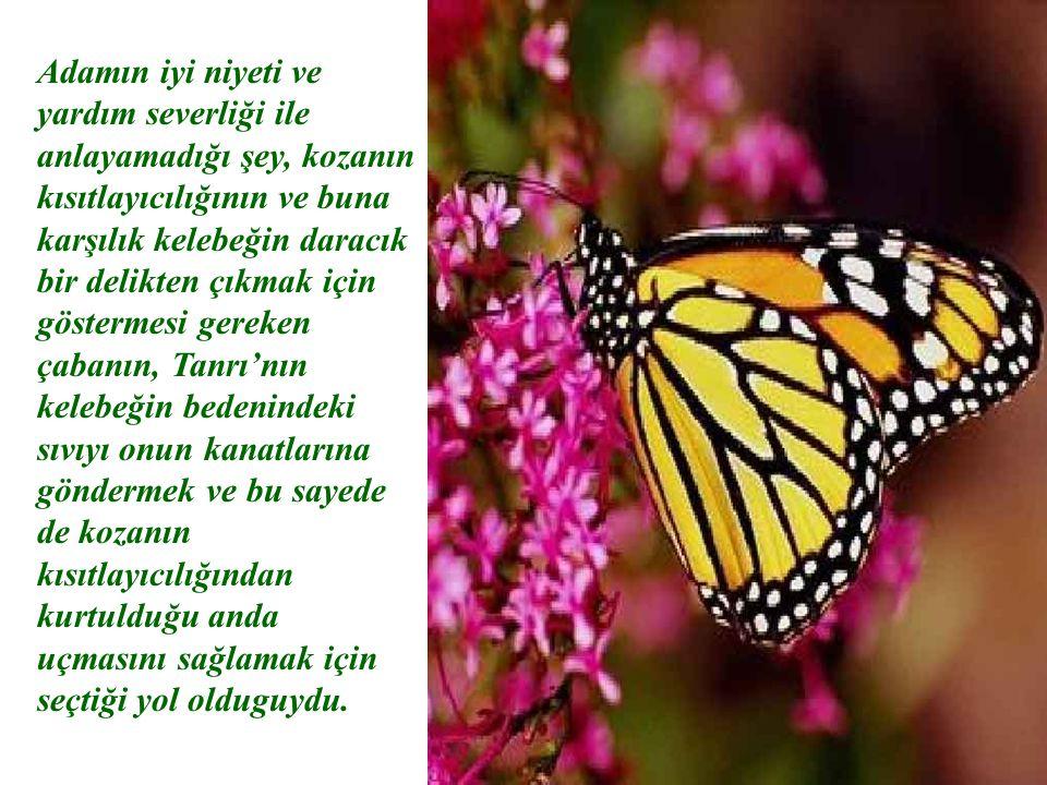 Adamın iyi niyeti ve yardım severliği ile anlayamadığı şey, kozanın kısıtlayıcılığının ve buna karşılık kelebeğin daracık bir delikten çıkmak için göstermesi gereken çabanın, Tanrı'nın kelebeğin bedenindeki sıvıyı onun kanatlarına göndermek ve bu sayede de kozanın kısıtlayıcılığından kurtulduğu anda uçmasını sağlamak için seçtiği yol olduguydu.