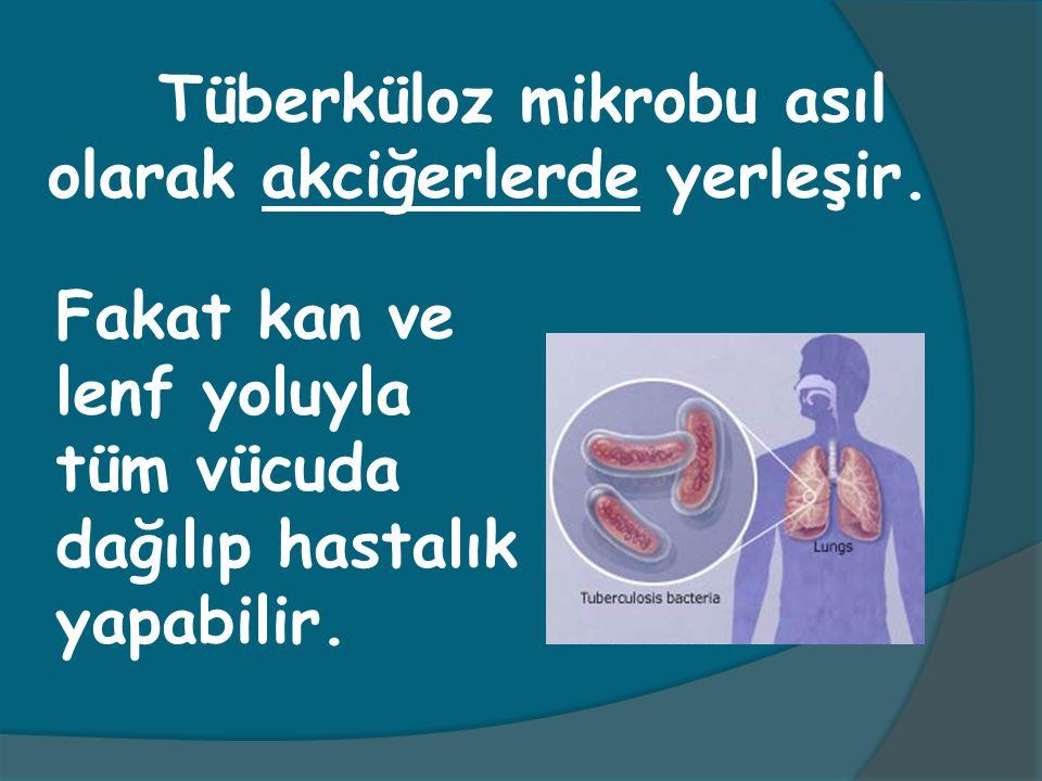 Fakat kan ve lenf yoluyla tüm vücuda dağılıp hastalık yapabilir. Tüberküloz mikrobu asıl olarak akciğerlerde yerleşir.