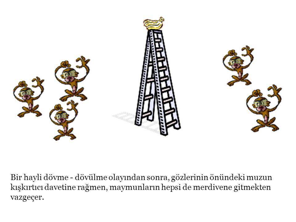 Bunun üzerine kurulum değiştirilir : beş maymundan biri kafesten çıkarılıp yerine yeni bir tane konur.