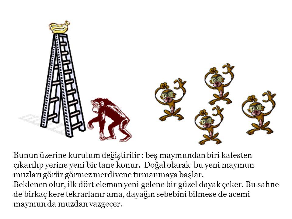 Bunun üzerine kurulum değiştirilir : beş maymundan biri kafesten çıkarılıp yerine yeni bir tane konur. Doğal olarak bu yeni maymun muzları görür görme