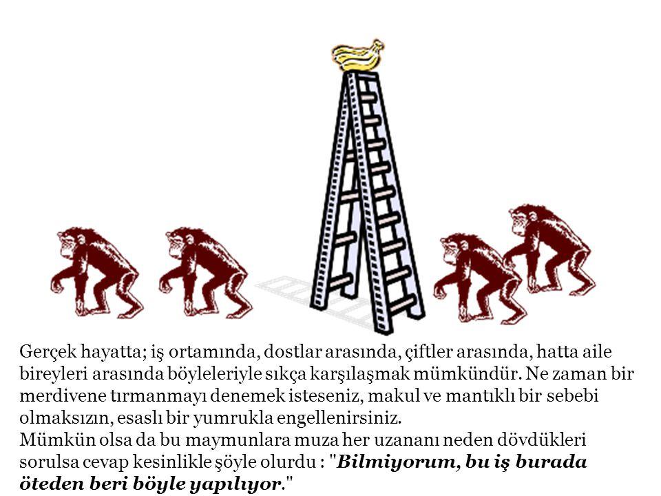 Bizim seçme imkânımız var: ya maymun olmaya devam eder, hem aç kalır, hem dayak yeriz; ya da insan olur, merdivene hep beraber tırmanır, engelleri el birliğiyle aşıp yemeği bölüşürüz.