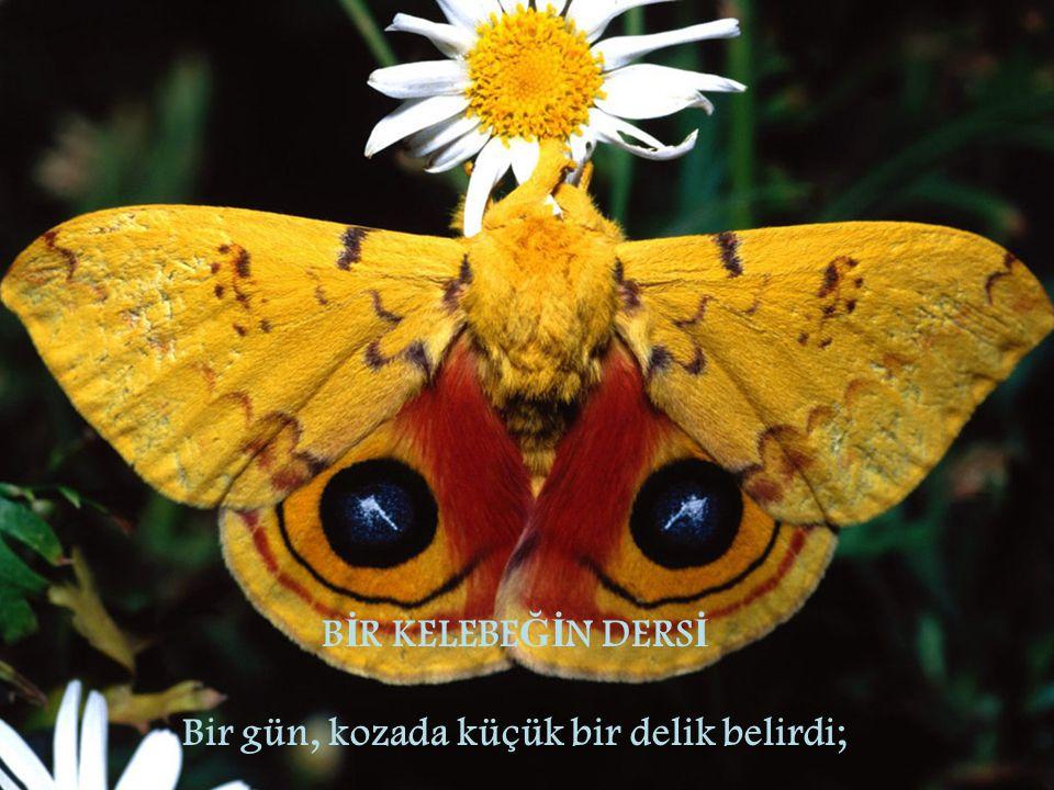 Bir adam oturup kelebe ğ in saatler boyunca bedenini bu küçük delikten çıkarmak için harcadı ğ ı çabayı izledi.