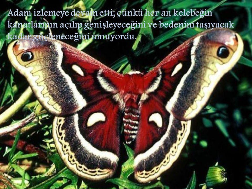 Adam izlemeye devam etti; çünkü her an kelebe ğ in kanatlarının açılıp geni ş leyece ğ ini ve bedenini ta ş ıyacak kadar güçlenece ğ ini umuyordu.