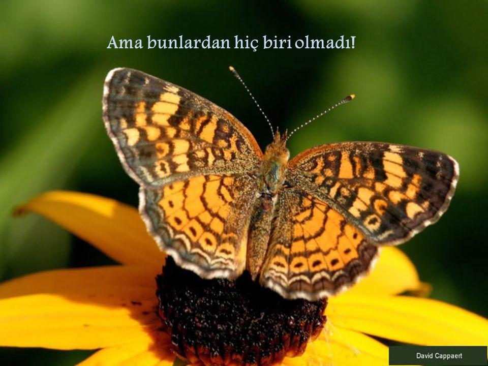 Kelebek hayatının geri kalanını kurumu ş bir beden ve buru ş mu ş kanatlarla yerde sürünerek geçirdi.