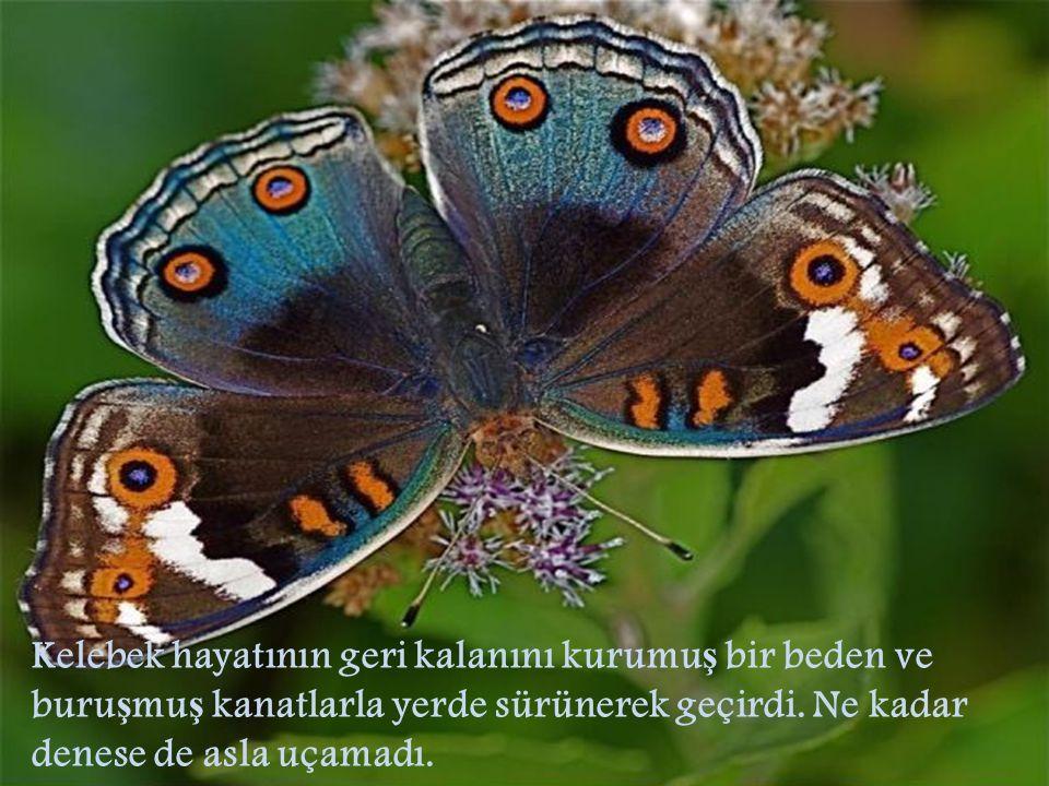 Adamın iyi niyeti ve yardımseverli ğ i ile anlayamadı ğ ı ş ey, kozanın kısıtlayıcılı ğ ının ve buna kar ş ılık kelebe ğ in daracık bir delikten çıkmak için göstermesi gereken çabanın, Yüce Yaratıcı'nın kelebe ğ in bedenindeki sıvıyı onun kanatlarına göndermek ve bu sayede de kozanın kısıtlayıcılı ğ ından kurtuldu ğ u anda uçmasını sa ğ lamak için seçti ğ i yol buydu.