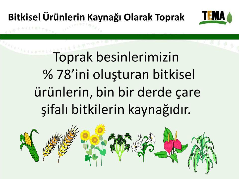 Bitkisel Ürünlerin Kaynağı Olarak Toprak Toprak besinlerimizin % 78'ini oluşturan bitkisel ürünlerin, bin bir derde çare şifalı bitkilerin kaynağıdır.
