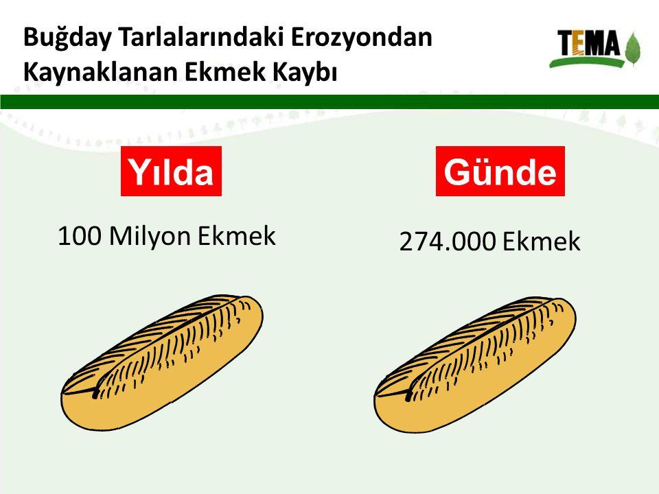 Buğday Tarlalarındaki Erozyondan Kaynaklanan Ekmek Kaybı Yılda 100 Milyon Ekmek Günde 274.000 Ekmek