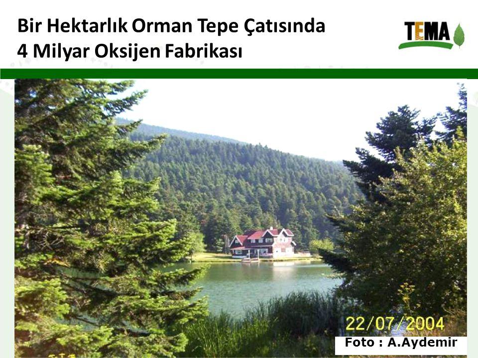 Bir Hektarlık Orman Tepe Çatısında 4 Milyar Oksijen Fabrikası Foto : A.Aydemir