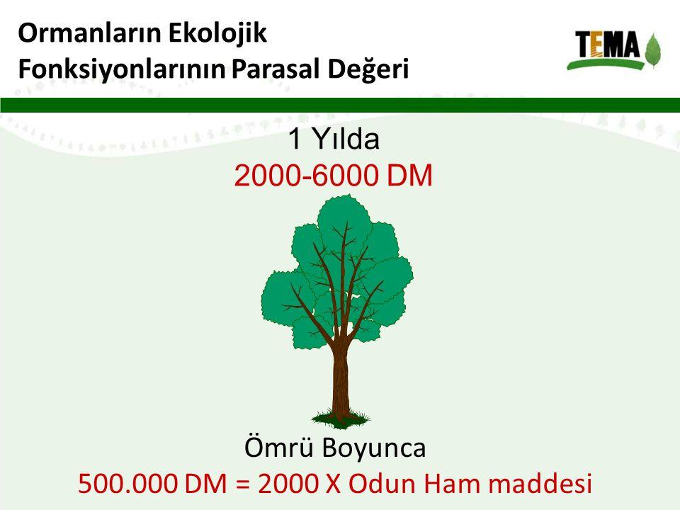 Ormanların Ekolojik Fonksiyonlarının Parasal Değeri 1 Yılda 2000-6000 DM Ömrü Boyunca 500.000 DM = 2000 X Odun Ham maddesi