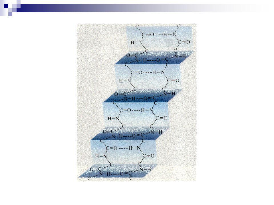 Tersiyer Yapı  Peptid bağı  Hidrojen bağı  Disülfid bağı  İyonik etkileşimler  Hidrofobik etkileşimler  Van der Waals bağı