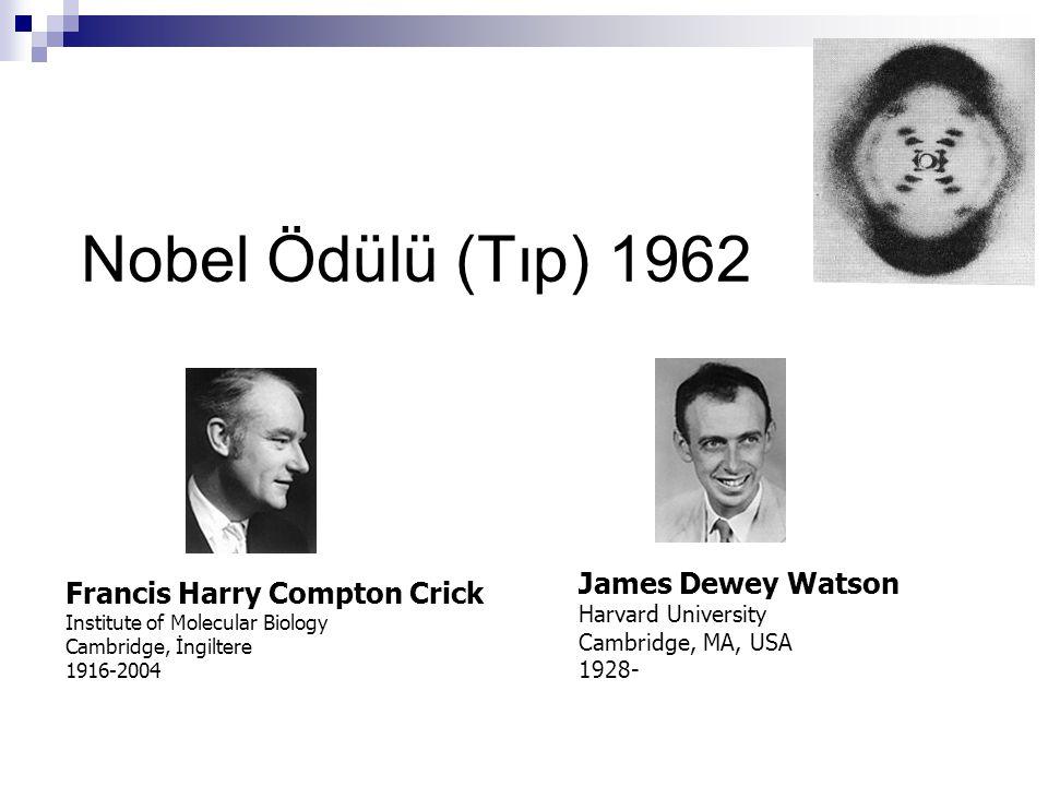 Nobel Ödülü (Tıp) 1962 Francis Harry Compton Crick Institute of Molecular Biology Cambridge, İngiltere 1916-2004 James Dewey Watson Harvard University