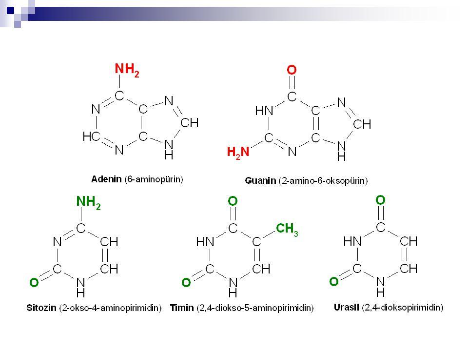 Nükleozidler  -N-glikosidik bağı Karbohidrat Baz