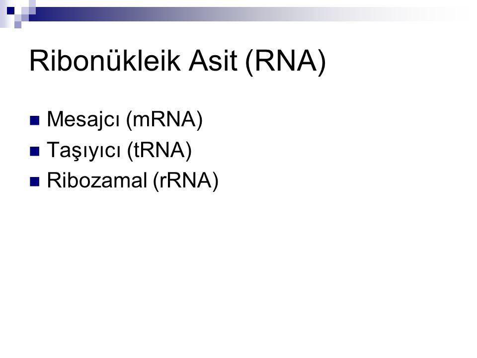 Ribonükleik Asit (RNA)  Mesajcı (mRNA)  Taşıyıcı (tRNA)  Ribozamal (rRNA)