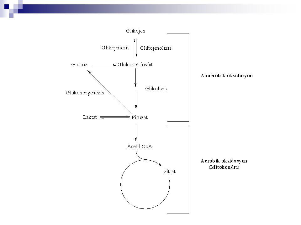 Glikoliz Reaksiyonları 1.Fosfat transfer reaksiyonları: Kinaz 2.