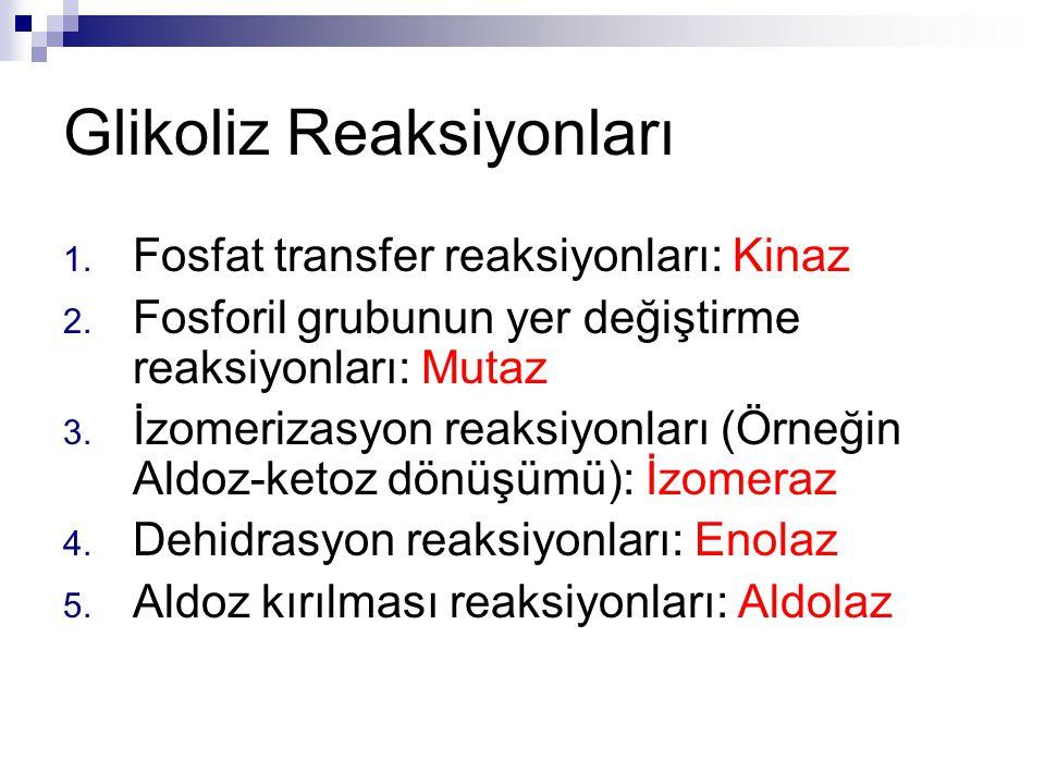 Glikoliz Reaksiyonları 1. Fosfat transfer reaksiyonları: Kinaz 2. Fosforil grubunun yer değiştirme reaksiyonları: Mutaz 3. İzomerizasyon reaksiyonları