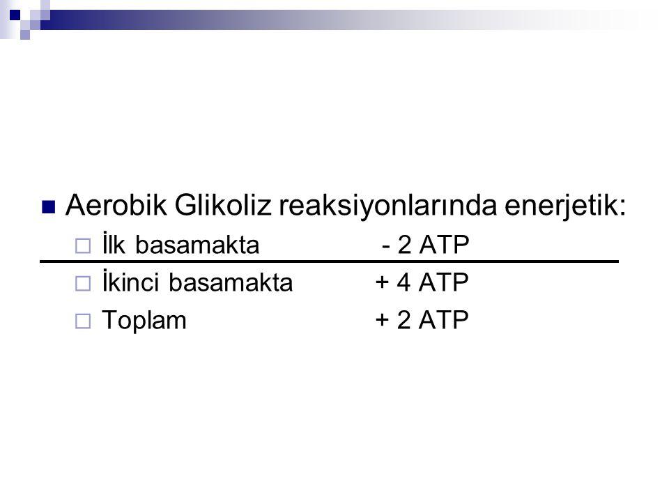 Aerobik Glikoliz reaksiyonlarında enerjetik:  İlk basamakta - 2 ATP  İkinci basamakta + 4 ATP  Toplam + 2 ATP