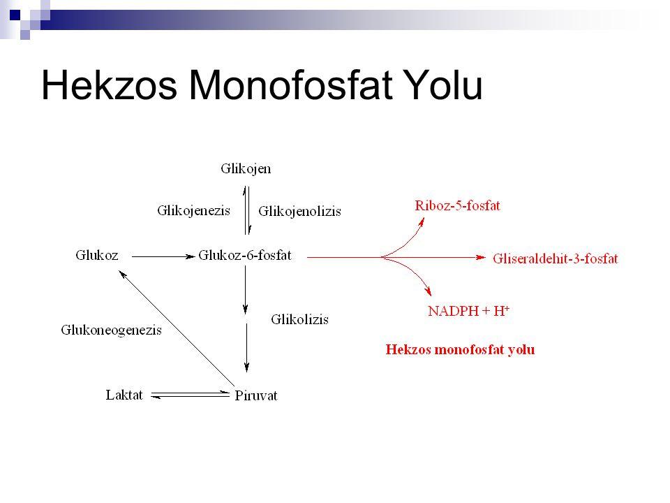 Hekzos Monofosfat Yolu