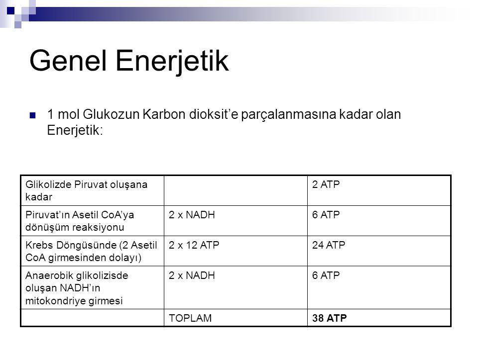 Genel Enerjetik  1 mol Glukozun Karbon dioksit'e parçalanmasına kadar olan Enerjetik: Glikolizde Piruvat oluşana kadar 2 ATP Piruvat'ın Asetil CoA'ya
