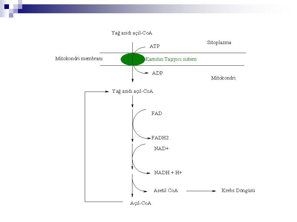 Genel Enerjetik  1 mol Palmitik asidin Karbon dioksit'e parçalanmasına kadar olan Enerjetik: 8 Asetil CoA8 x 12 ATP96 ATP 7 x NADH7 x 3 ATP21 ATP 7 x FADH7 x 2 ATP14 ATP Aktivasyon için - 2 ATP TOPLAM129 ATP