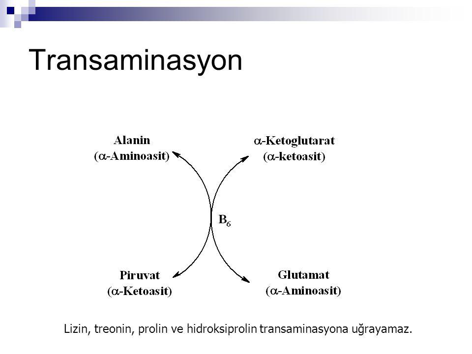 Oksidatif Deaminasyon: Glutamat Dehidrojenaz Mitokondriyal