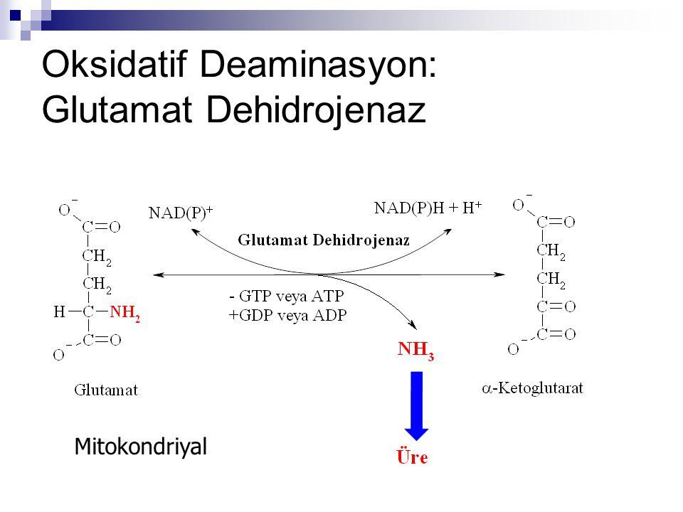 Amonyağın kaynakları  Dokular  Barsak bakterileri  Diyetsel protein  GİS'de bulunan üre