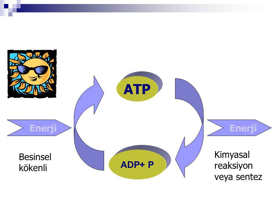 ATP ADP+ P Enerji Besinsel kökenli Kimyasal reaksiyon veya sentez
