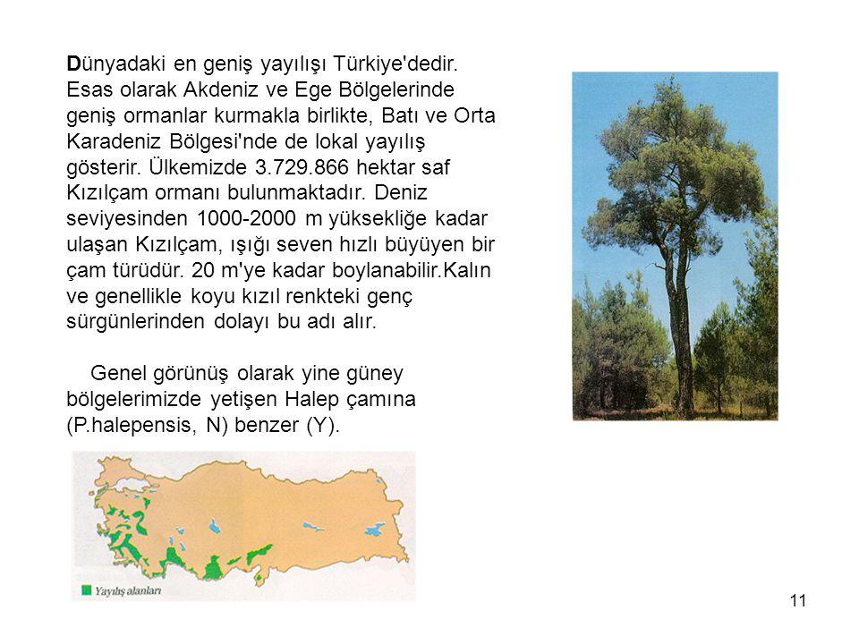 11 Dünyadaki en geniş yayılışı Türkiye dedir.