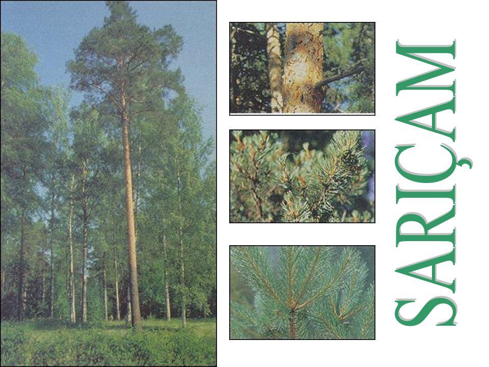 23 Dünya üzerindeki nadir doğal ormanlarının bir bölümü de ülkemizin güneyindedir.