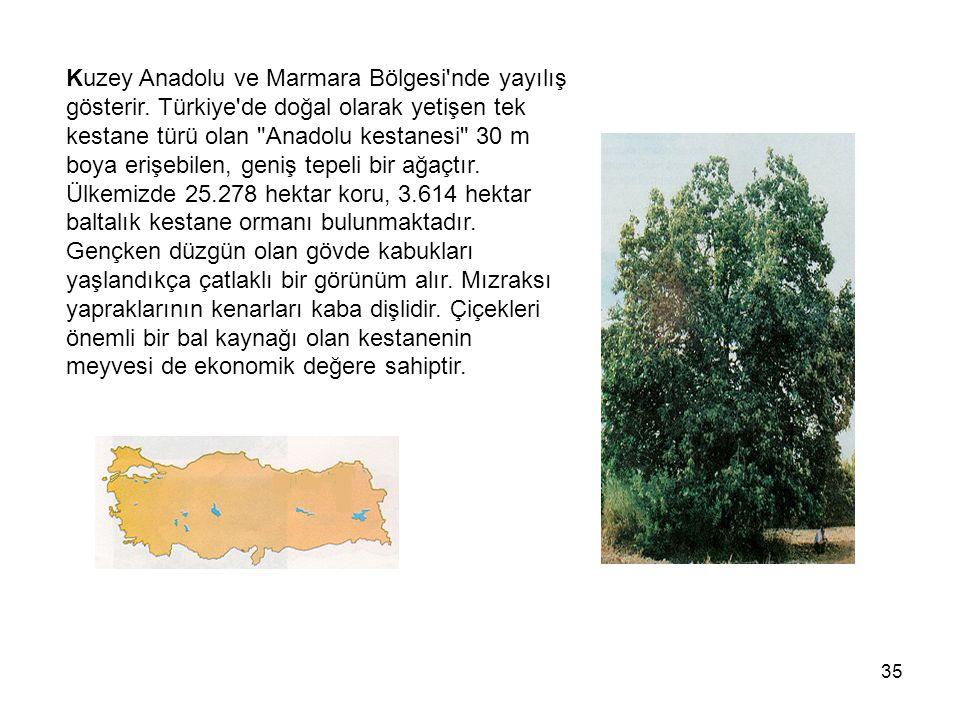 35 Kuzey Anadolu ve Marmara Bölgesi nde yayılış gösterir.